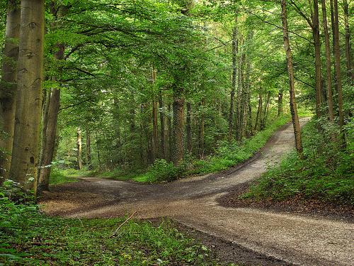 cruce-de-caminos-bosque